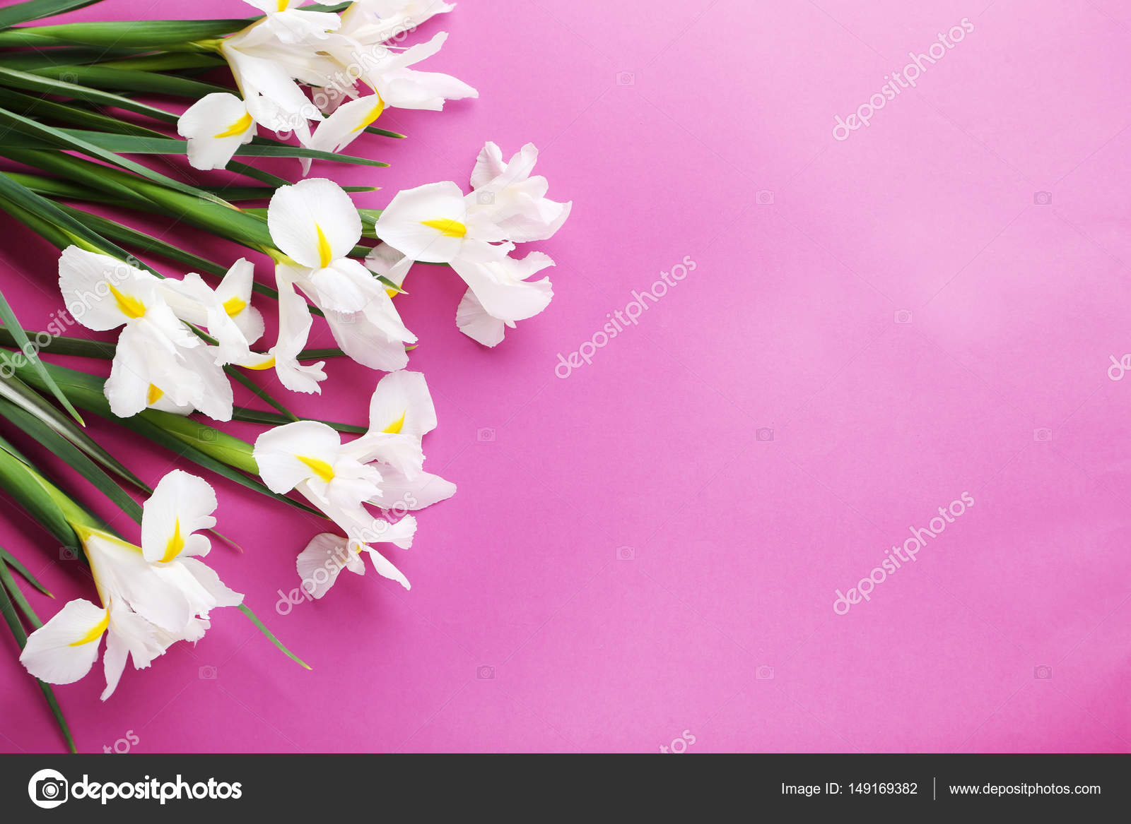 Bouquet of white iris flowers stock photo 5seconds 149169382 bouquet of white iris flowers on pink background photo by 5seconds izmirmasajfo Choice Image