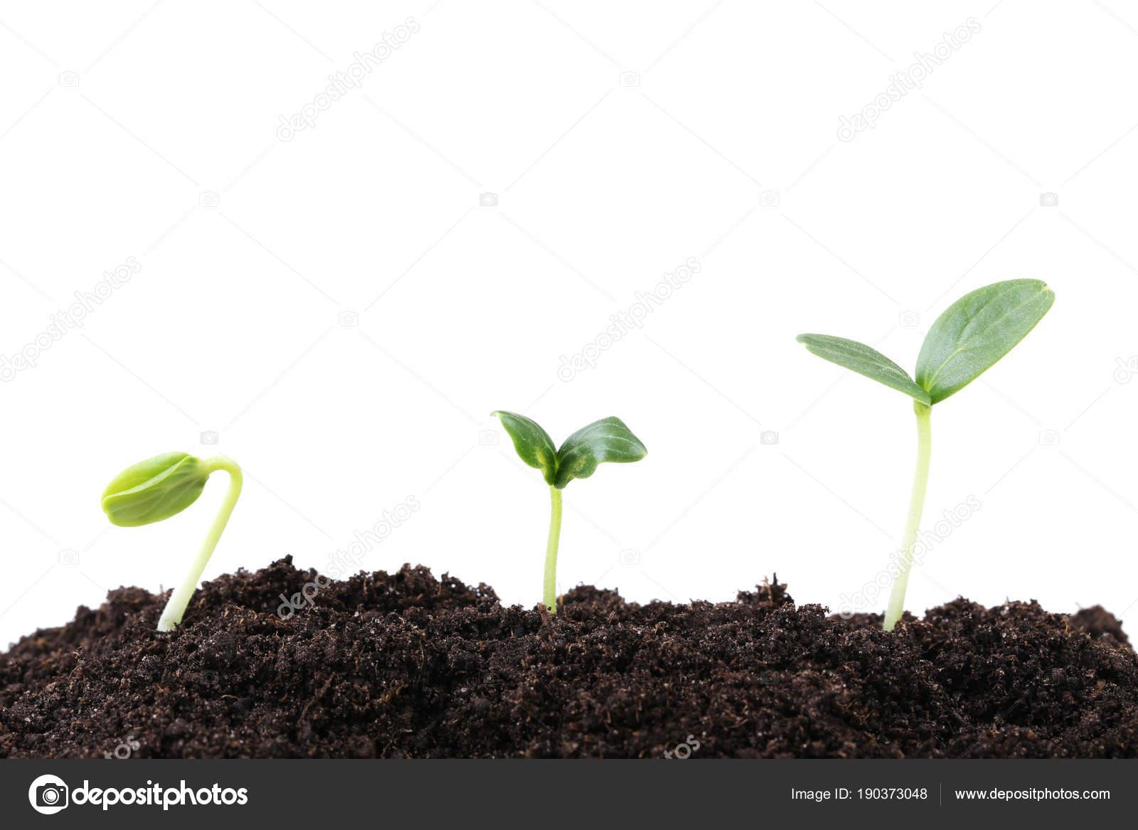 Junge Pflanzen Boden Auf Weissem Hintergrund Stockfoto C 5seconds