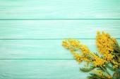 Fotografie Mimosa flowers on mint wooden table