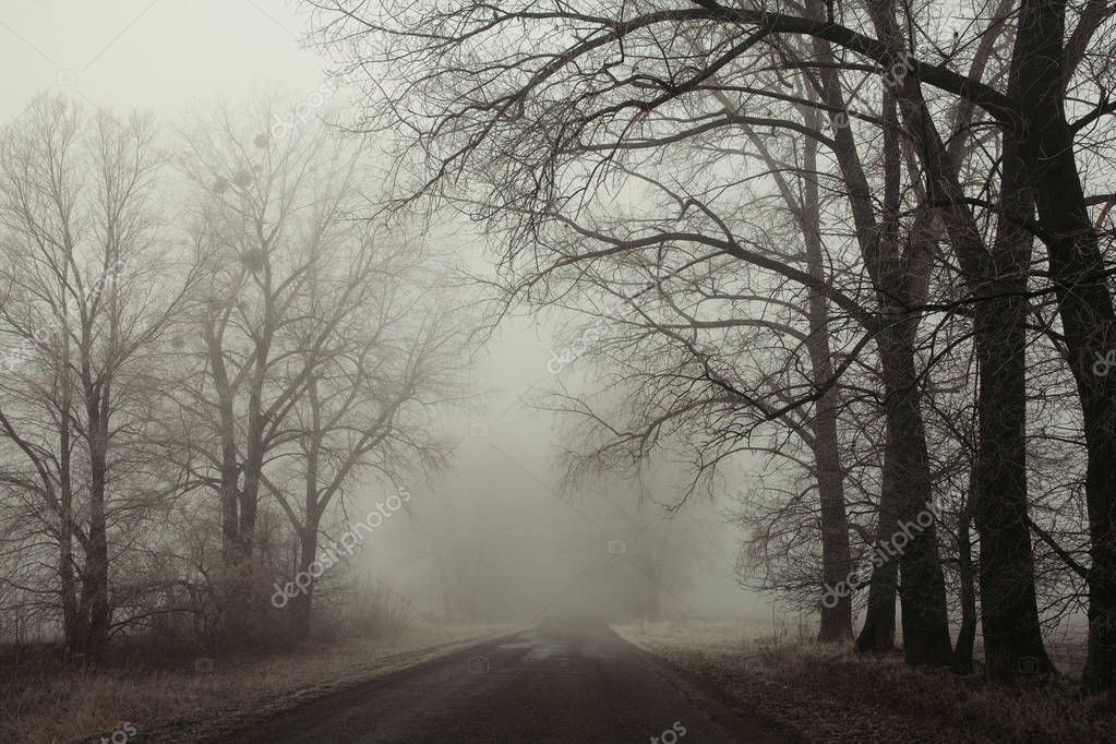 Фотообои Foggy road and trees. Mysterious forest background. Early morning landscape, frost on the ground. noise film effect. horizontal photo