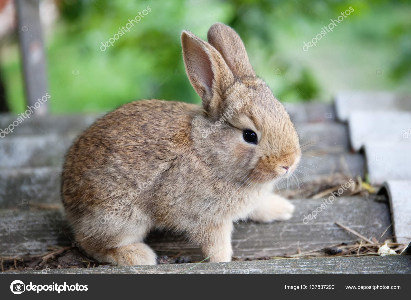 Cute Brown Bunny | www.pixshark.com - Images Galleries