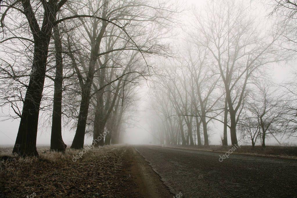 Фотообои Туманный пересечения лесной дороги и деревья. Таинственные фоне пейзажа ранним утром, иней на земле. шумовой эффект пленки. горизонтальное фото