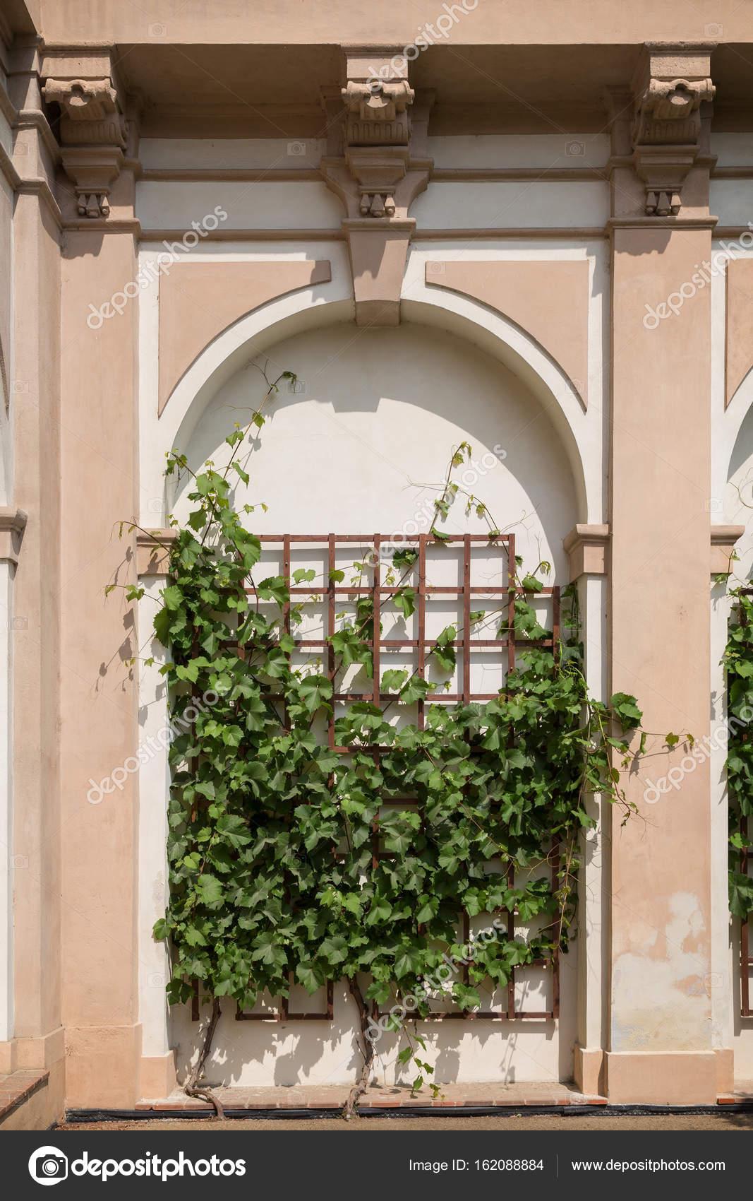 Plante Sur Les Murs plante grimpante sur un mur — photographie tuomas_lehtinen