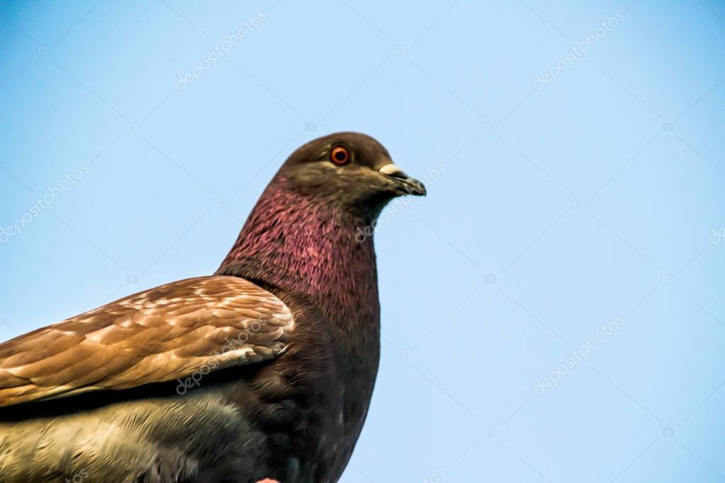 Dove in urban scene