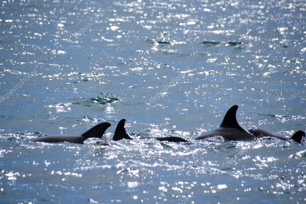 Dolphins in the sea waves