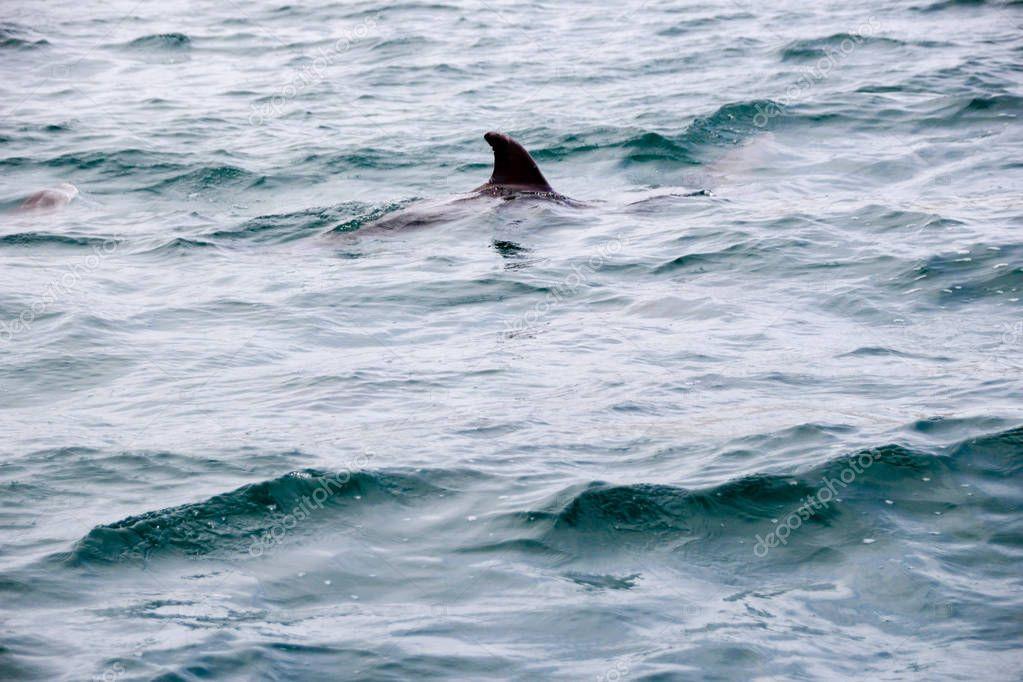 пляж волна темрюк фото дельфины плитка оформлении