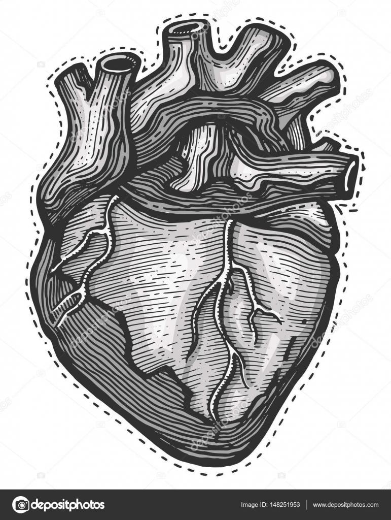 Coeur Humain Dessinés à La Main Image Vectorielle