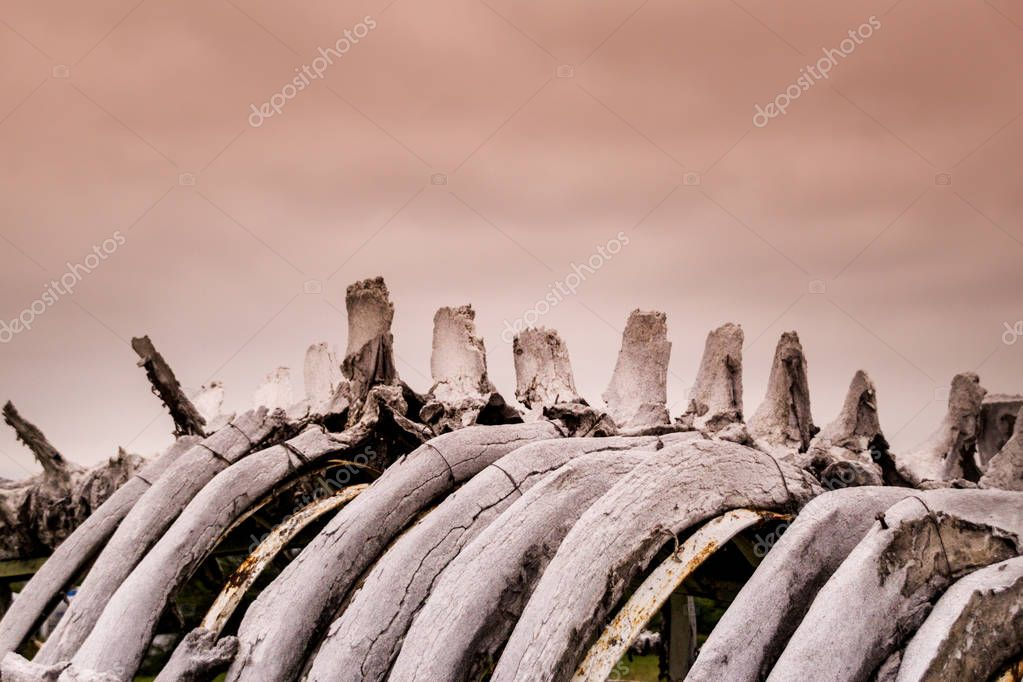close-up photo of old whale bones detail on sky background