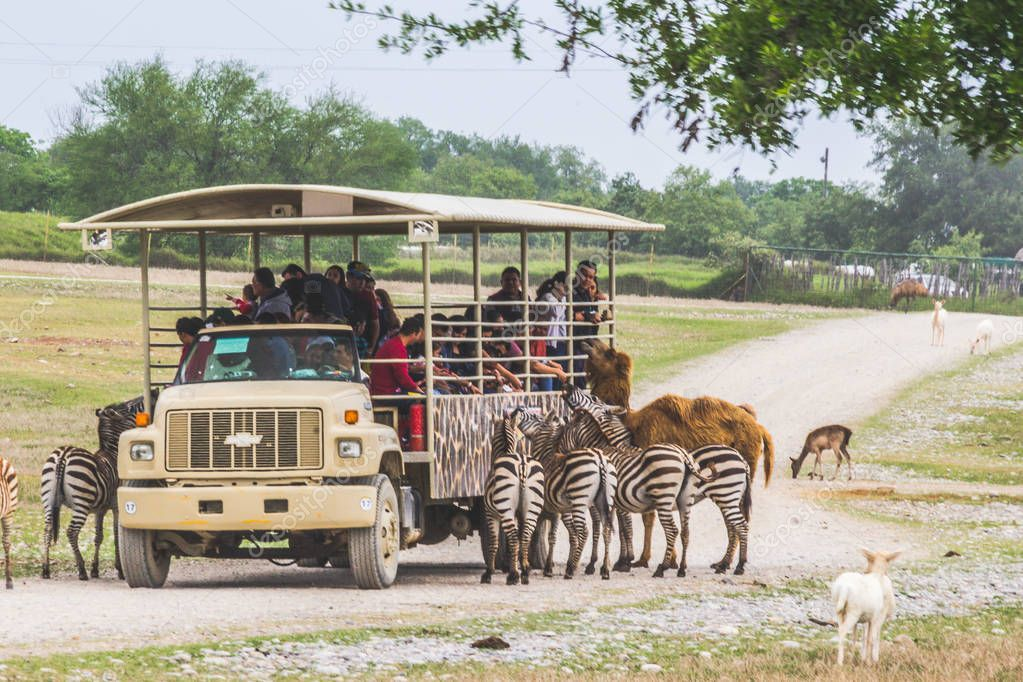Monterrey, Nuevo Len/ Mexico - 4/8/2018: Photograph of a safari truck surrounded by animals in Bioparque Estrella