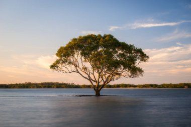 lonely tree in water