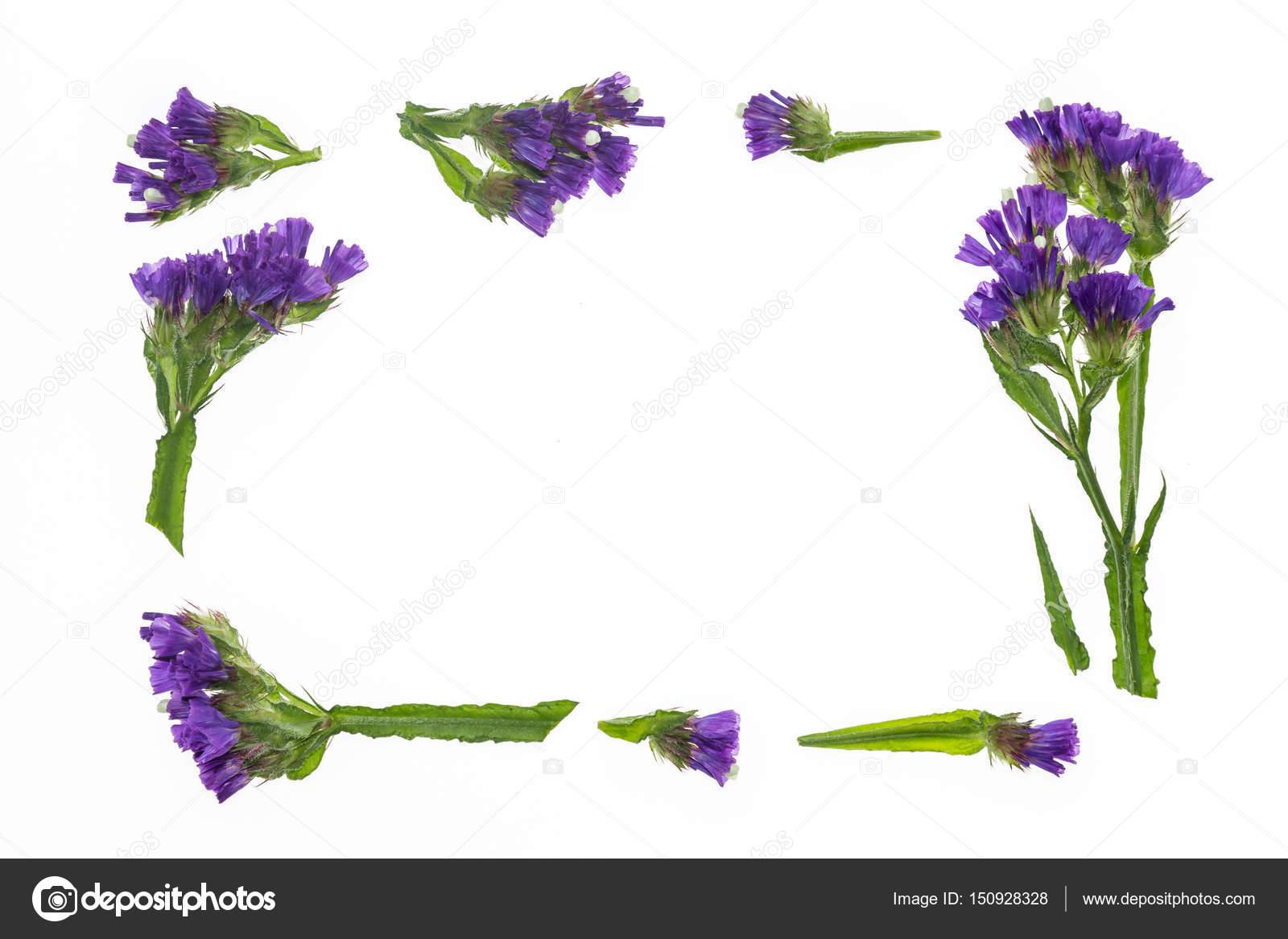 紫のスターチスの花枠 ストック写真 Pstedrak 150928328