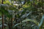 Fotografie tropischer Regenwald mit Palmen