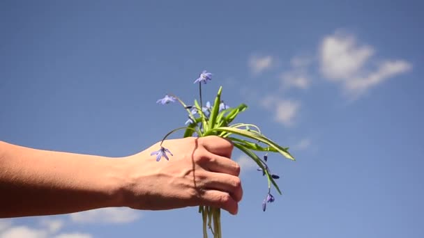 mother gives child in hand of beautiful blue flowers on blue sky background, spring flowers Scilla on background of blue sky.