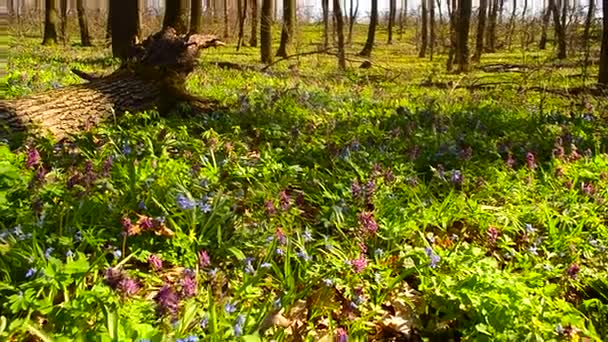 beautiful flower meadow in forest, bees pollinate purple and blue flowers in Park
