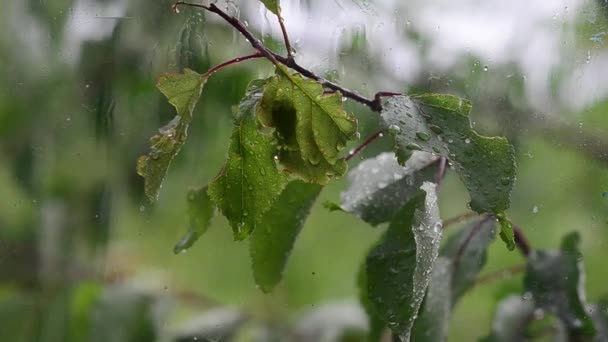 vítr třese stromy, kapky deště padají na listy stromu, větru a deště za oknem