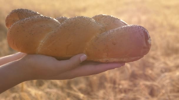 zrna pšenice padají na chléb v rukou dívky, na poli pšenice. Zpomaleně. pšeničný sypytsya na lahodné bochníku s makovým osivem. na dlaně chutná bochník chleba. žitný chléb nad klasy kukuřice
