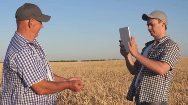 farmář a podnikatel s tabletem pracující jako tým v terénu. agronomové a farmáři drží v rukou zrnko pšenice. Sklizeň cereálií. Podnikatel kontroluje kvalitu obilí..