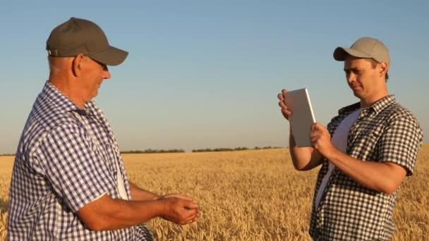 podnikatel a farmář s tabletem pracující jako tým v terénu. agronomové a farmáři drží v rukou zrnko pšenice. Sklizeň cereálií. Podnikatel kontroluje kvalitu obilí..