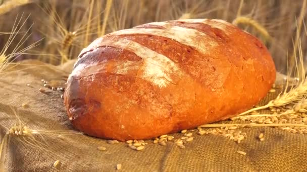 chutný chléb leží na poli na sáčku s klasy kukuřice a pšenice. Pečení chleba. Pšeničné pole. Obchodní koncept řízení. Vynikající bílý chléb právě udělal v pekárně.