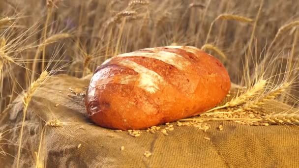 tasty bread lies in a field on a bag with ears of corn and wheat. baking bread. Wheat field. Management business concept. Delicious white bread just made at the bakery.