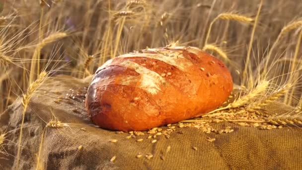 a delicious piece of bread lies on a bag. Wheat grains fall on bread over a field of wheat. ripe grain is poured onto delicious bread. Slow motion. fresh rye bread on ripe ears of corn