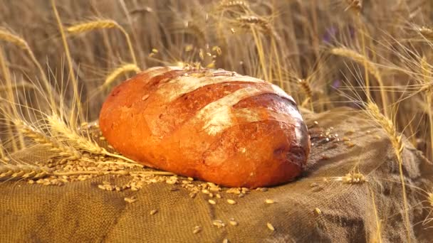 ripe wheat grains fall on fresh delicious crisp bread. a crispy loaf lies in a field of wheat. Delicious white bread just made at the bakery. Baking bread. Wheat field. Management business concept.