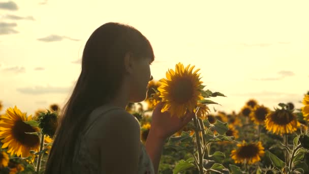 Young free woman traveler in a sunflower field in rays of sunrise or sunset is sunny. Young healthy girl examines a flowering sunflower. beautiful girl travels in countryside. adventure and travel