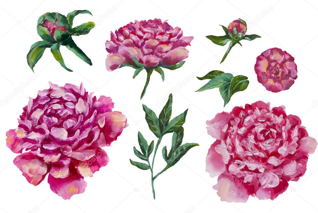 Set of peonies oil painting flowers peony Isolated on white background