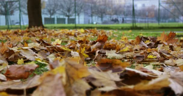 Autumn Leaves Falling in Park