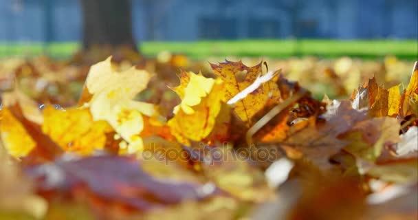 Podzimní listí v parku