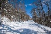 La strada di inverno attraverso il bosco innevato nel pomeriggio brillante