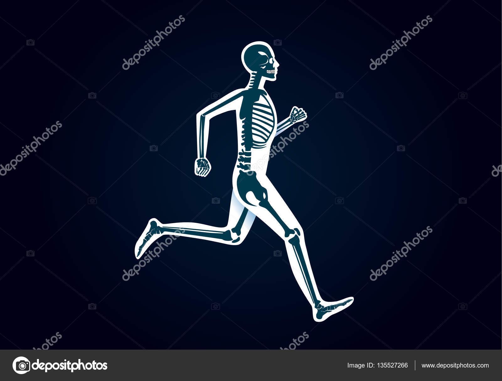 Menschliche Knochen Anatomie während Ausführung — Stockvektor ...