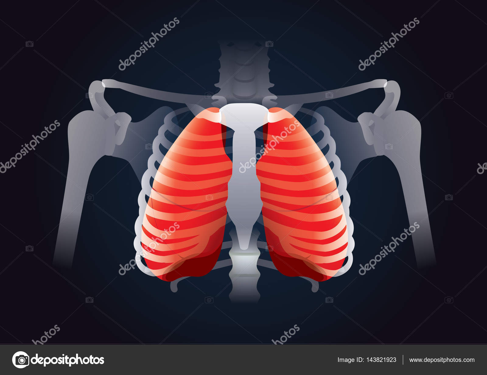 Pulmón de rojo en la jaula de costilla humana en negro — Vector de ...