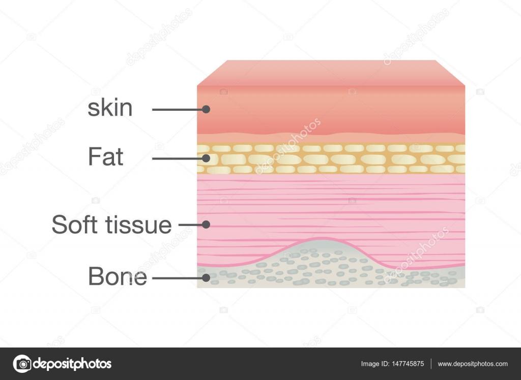 Normale Haut Anatomie des menschlichen — Stockvektor © solar22 ...