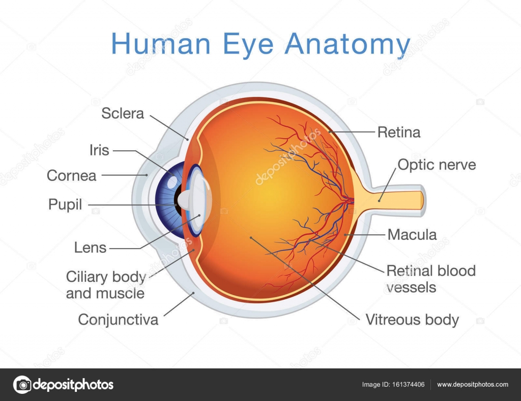 Anatomy of human eye and descriptions. — Stock Vector © solar22 ...