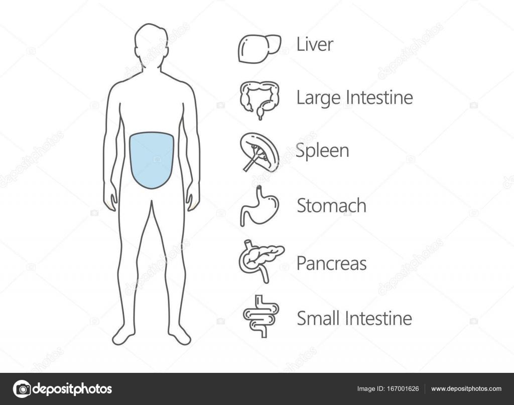 Menschlichen Magen-Darm-System-scan — Stockvektor © solar22 #167001626
