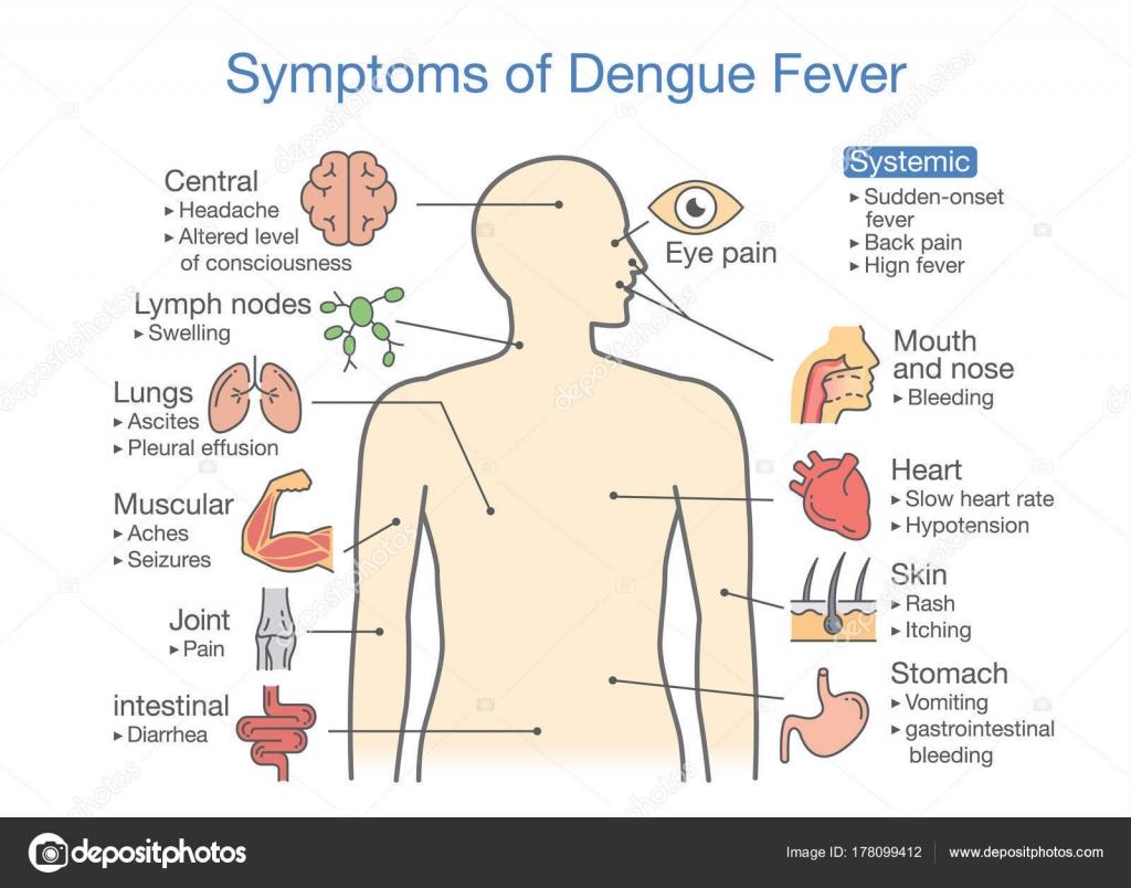 diagram of fever diagram of parts of an inhaler symptoms dengue fever patient illustration diagram health ...
