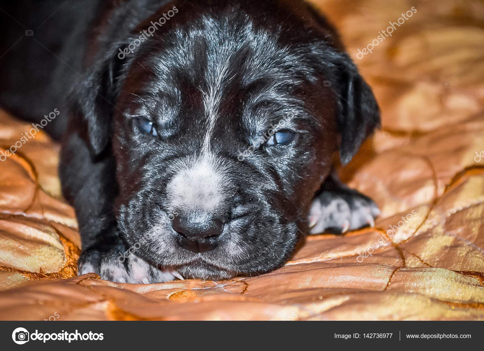 Immagini Cuccioli Labrador Appena Nati Cuccioli Appena Nati Nero