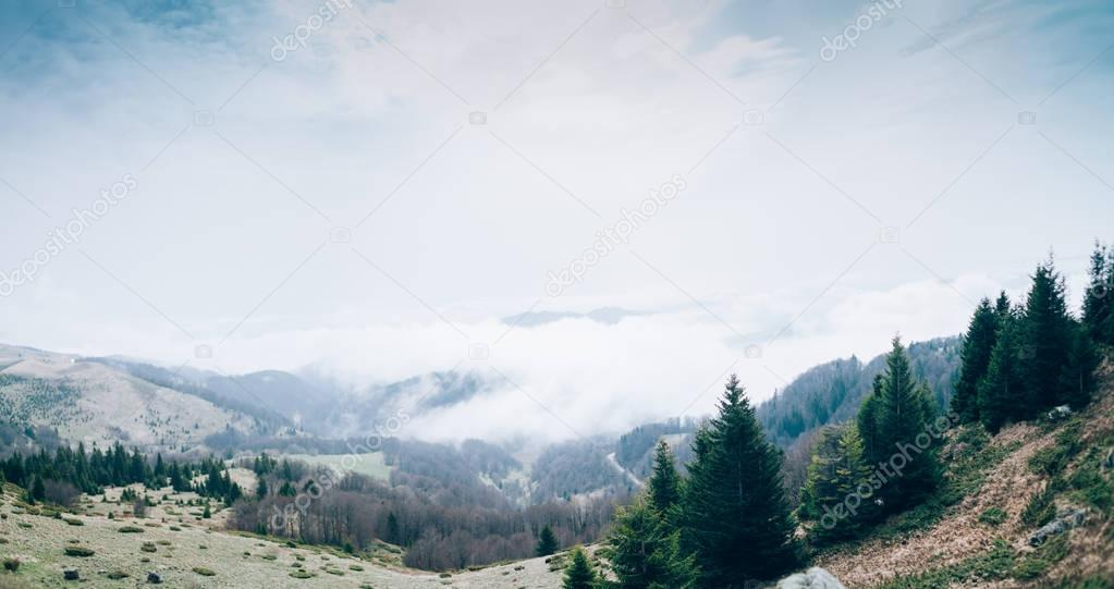 View of mountains forest