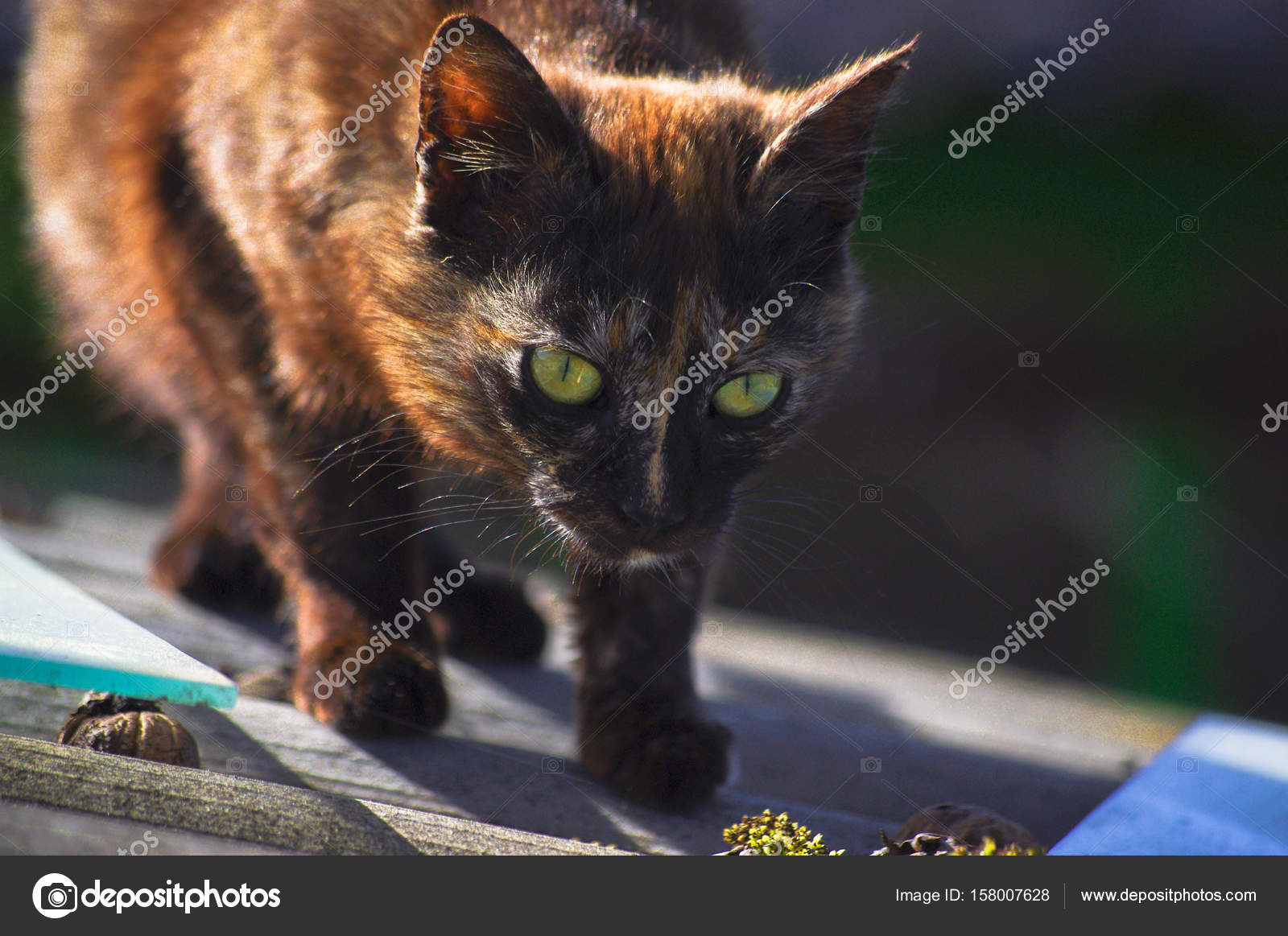 Krásná tmavá kočička
