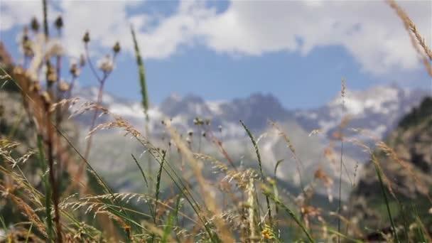 Lučních bylin houpat na horské pozadí stojan zaměření pohled zdola. Divoké květy plevele trávy v pohybu na sněhu-limitován vrcholy Mont Blanc Alpy v létě větrný den s stavební jeřáb na nohy