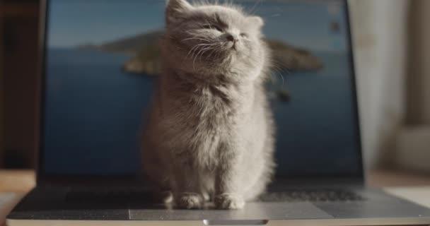 schläfriges, entzückendes Kätzchen, das auf der Computertastatur sitzt und faul blinzelt, erleuchtet von natürlichem Sonnenlicht. Indoor Porträt von pelzigen Kätzchen Katze posiert auf Meer Foto Hintergrund Zeitlupe