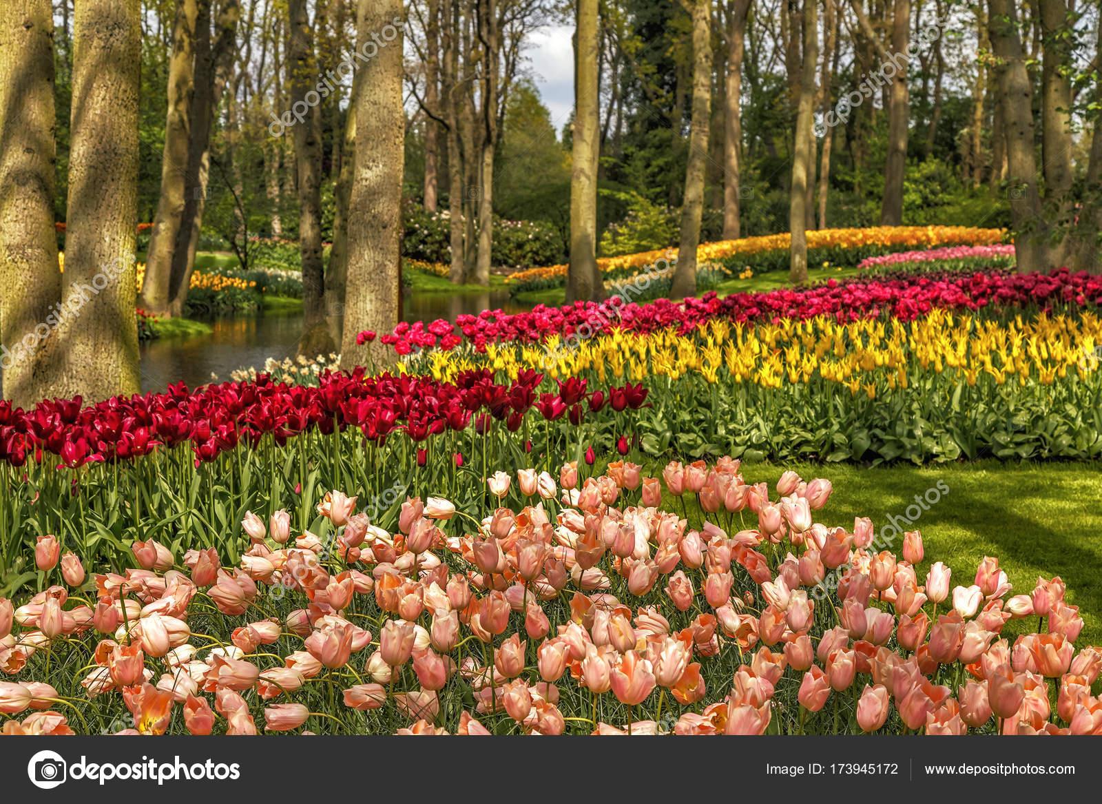 Blooming flowers in Keukenhof park — Stock Photo © tbralnina #173945172