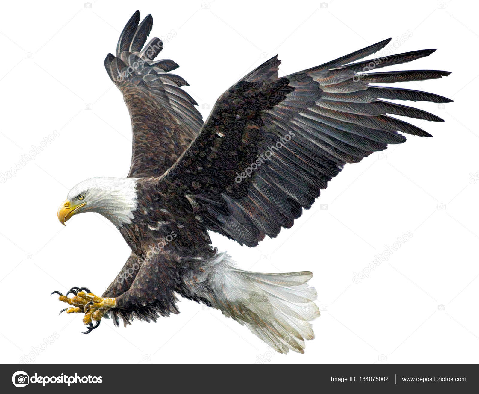 How To Draw A Bald Eagle Flying Best Eagle 2017