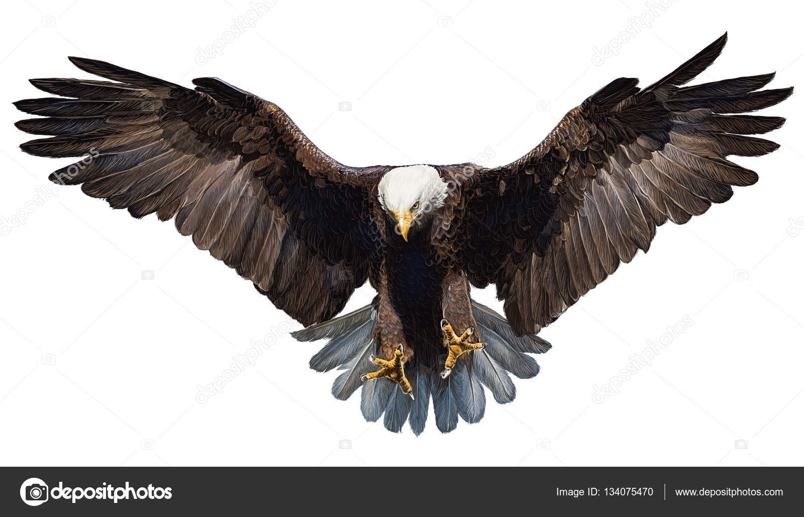 bald eagle render by - photo #26