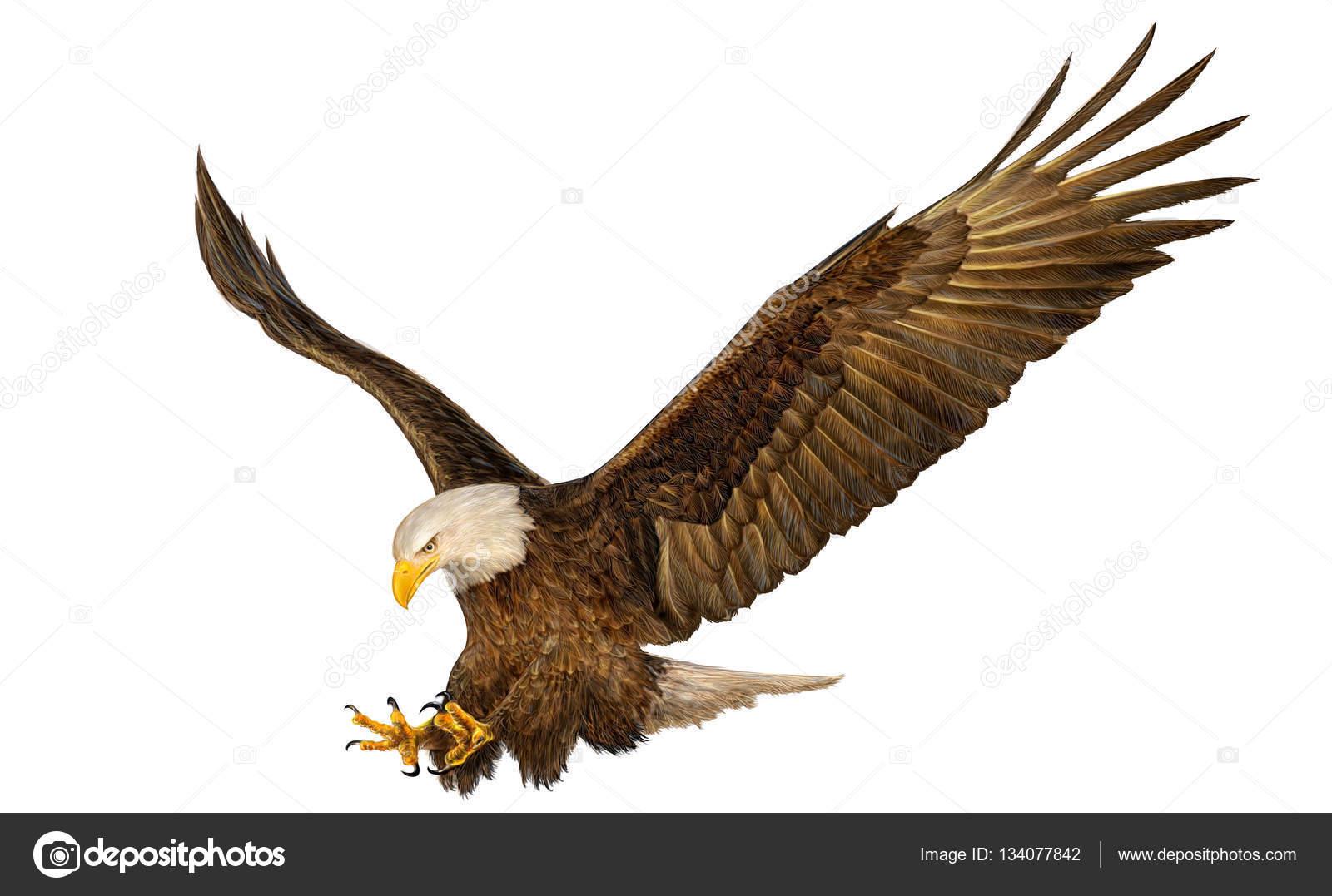 Águila calva volando mano dibujo y pintura en blanco — Fotos de ...
