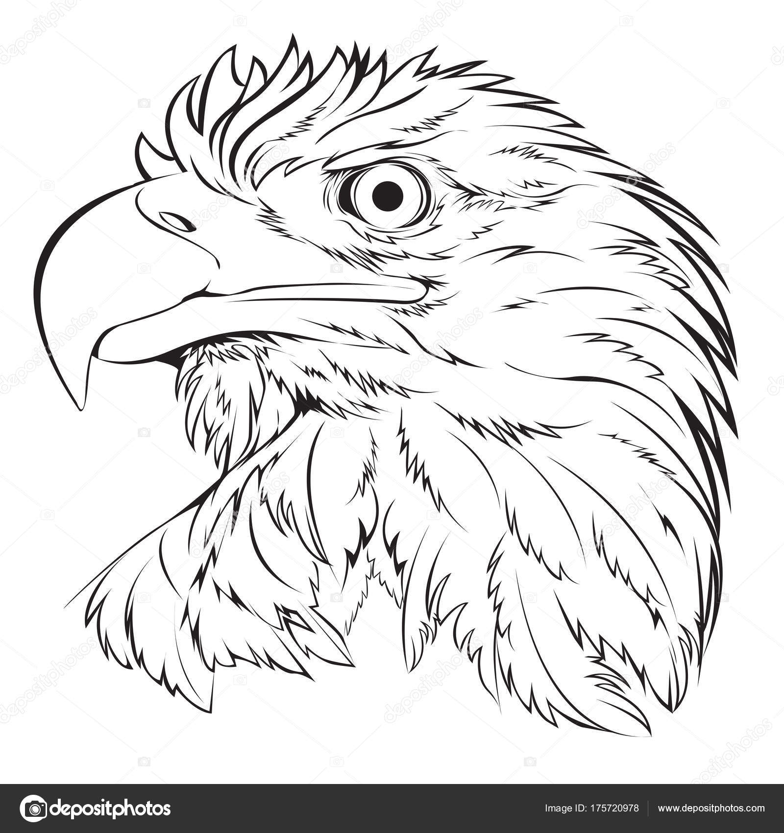 Bald eagle head hand draw black line on white background vector illustration stock illustration