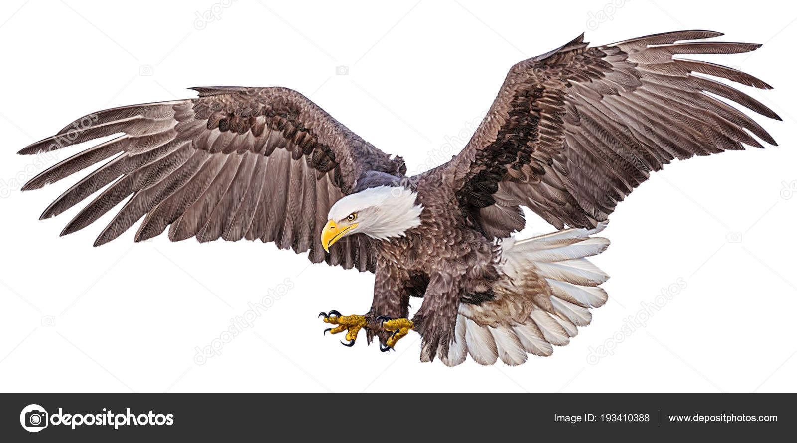Bald eagle flying swoop hand draw and paint color on white background illustration stock image