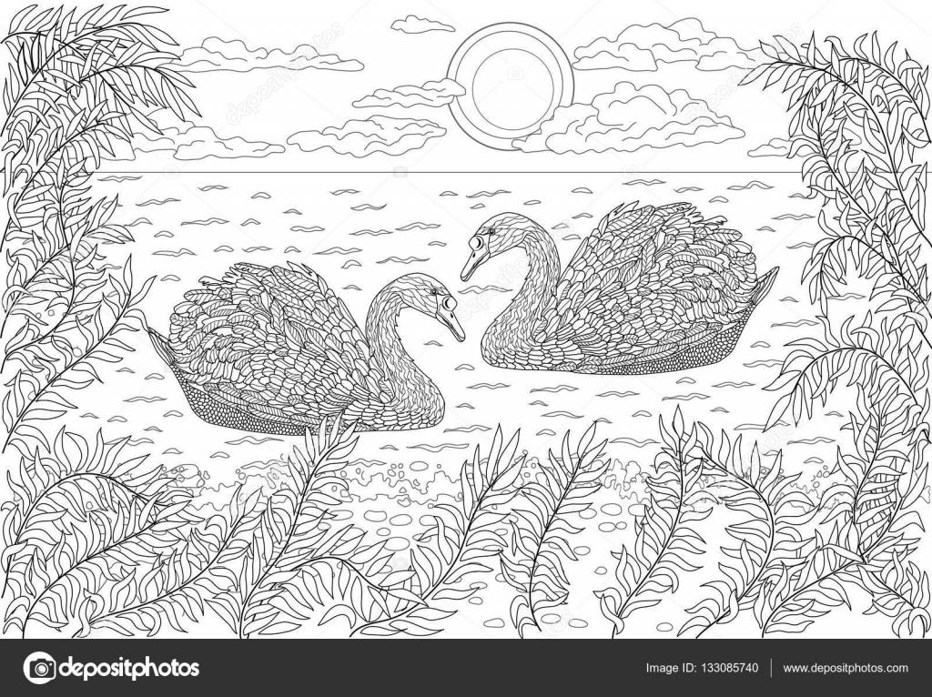 twee zwanen zwemmen in een vijver kleurplaat voor