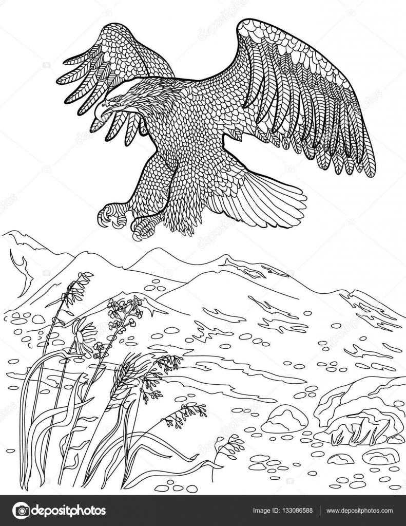 Caza del águila en vuelo. Libro para colorear para adultos — Vector ...